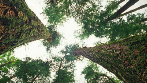 Suzanne Simard: How Do Trees Collaborate?