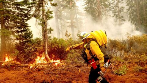 West Coast Fires: Climate, Forest Management, Lax Rules, Plenty Of Blame To Go Around