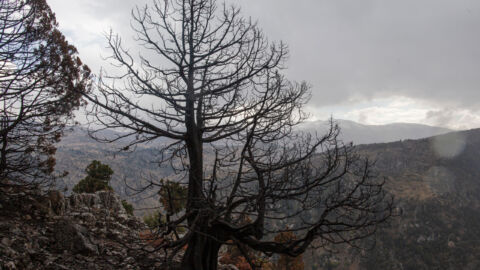 Climate Change Closes In On Lebanon's Iconic Cedar Trees