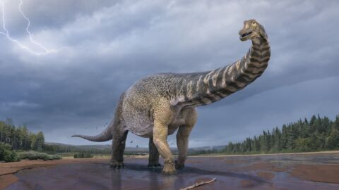 Dinosaur Found In Australia Was 2 Stories Tall And The Length Of A Basketball Court