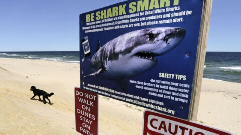 2 Australian States Say Their Sharks Will No Longer 'Attack.' They Will Only 'Bite'