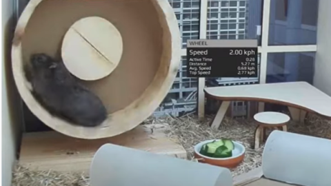 A Crypto-Trading Hamster Performs Better Than Warren Buffett And The S&P 500