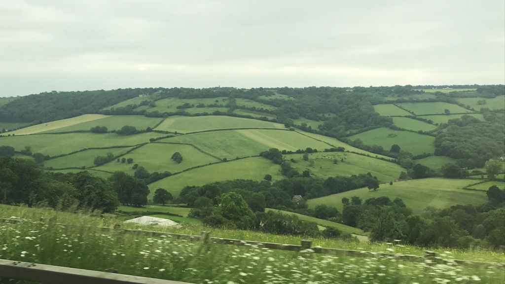 The Berkshire county fields, seen enroute to Highclere Castle.